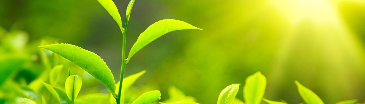 Welkom in de wereld van losse thee en tisanes